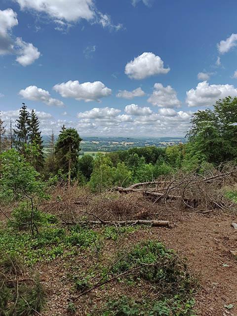 Uitzicht Teutoburgerwoud