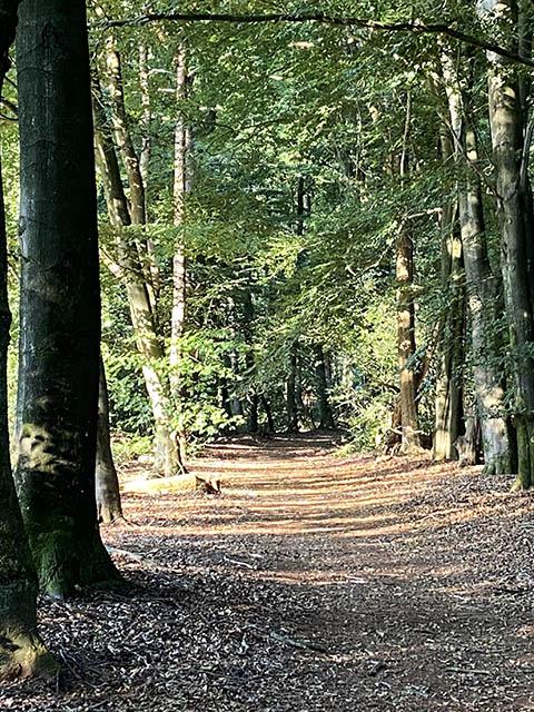 Bos bij oud Ootmarsum